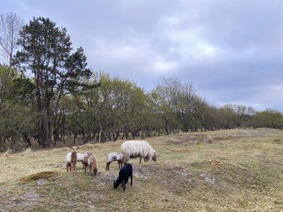 Vakantiehuis Bas schapen Pirola Vallei