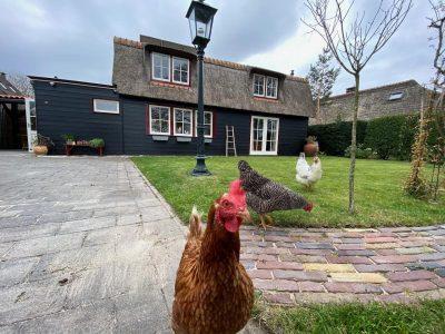 Vakantiehuis Bas kippen op bezoek