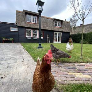 Vakantiehuis Bas huis Kippen